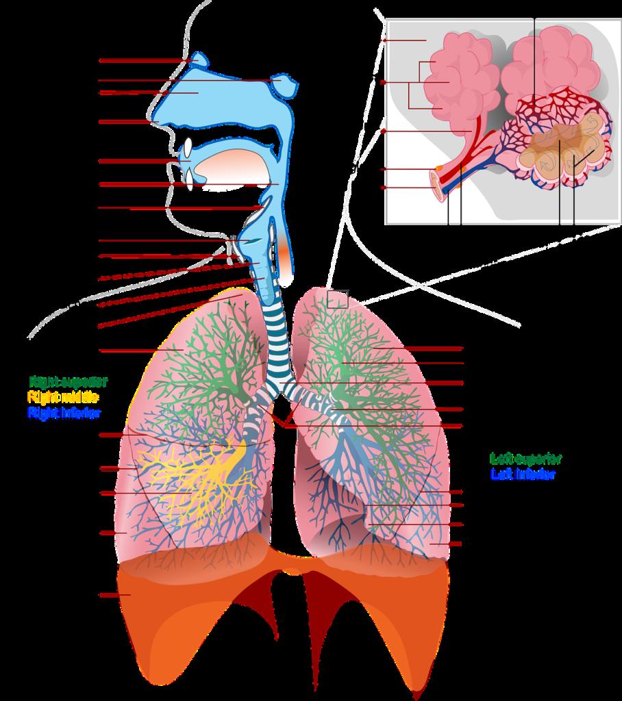 Choroby cywilizacyjne układu oddehowego